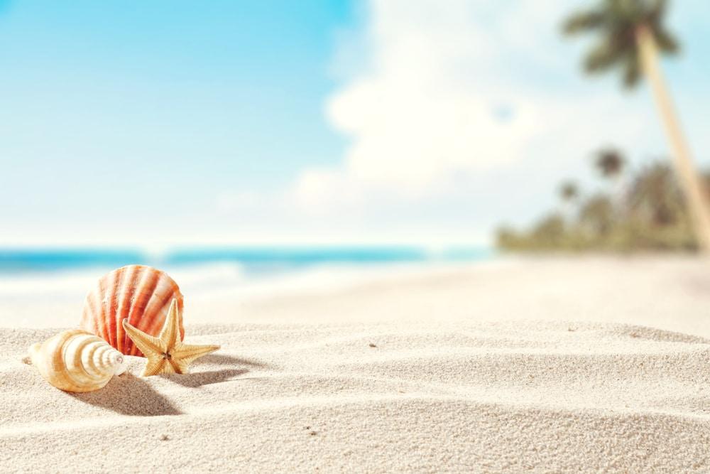 Strand und Muschel